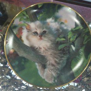 Коллекционные тарелки Котики